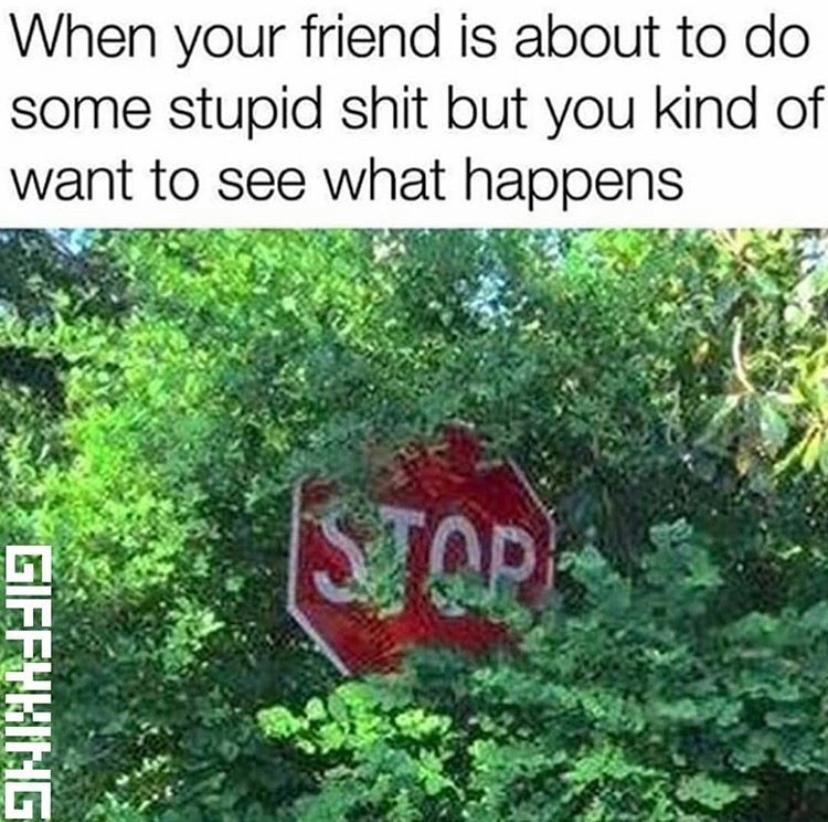 national-best-friends-day-meme-15-1559931829716.jpg