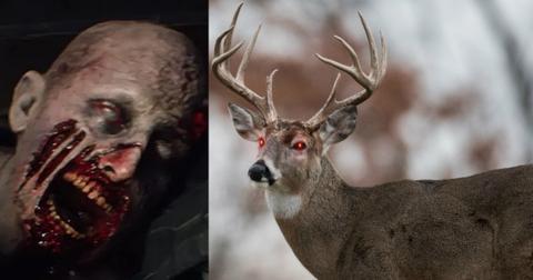 zombie-deer-outbreak-1550598029356-1550598031619.jpg