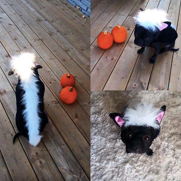 3-dog-costumes-1568997753726.jpg