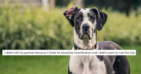 great-dane-featured-1557244795225.jpg