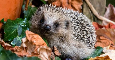 6-hedgehog-1557762956791.jpg