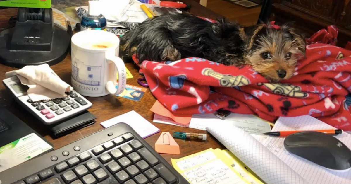20 Pets Who Are Ecstatic Their Owners Are Working From Home