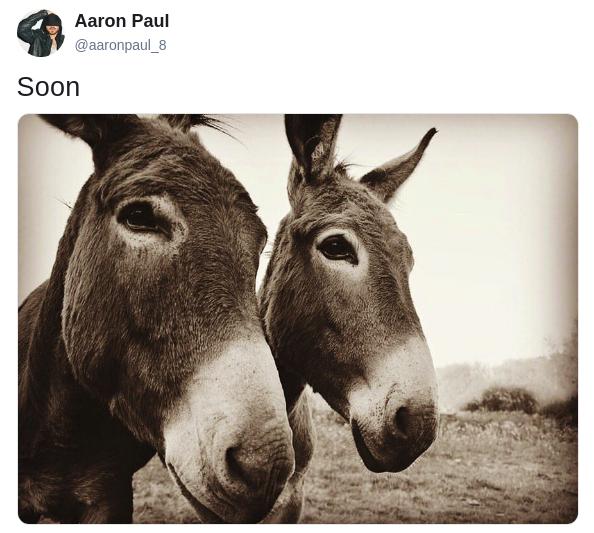 paul-donkey-tweet-2-1561586199637.png