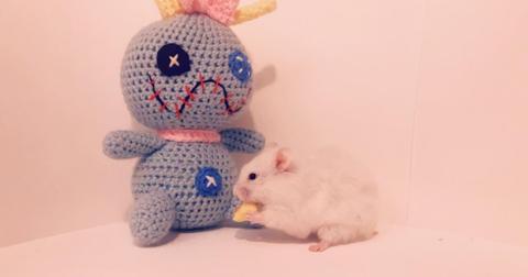 hamster-1570545921874.jpeg