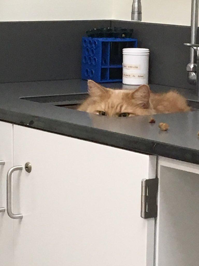 cat-vet-12-1545666882549.jpg