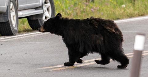 18-bear-1557763261092.jpg