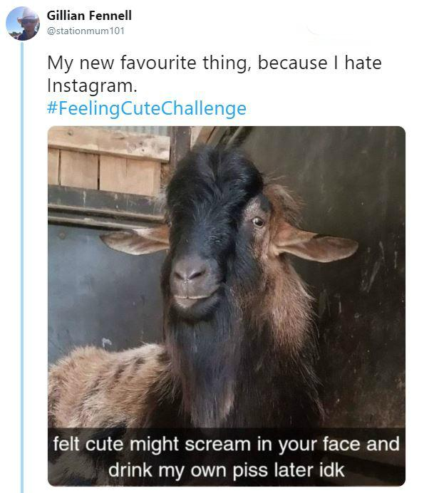 feeling-cute-challenge-16-1555443326625.JPG