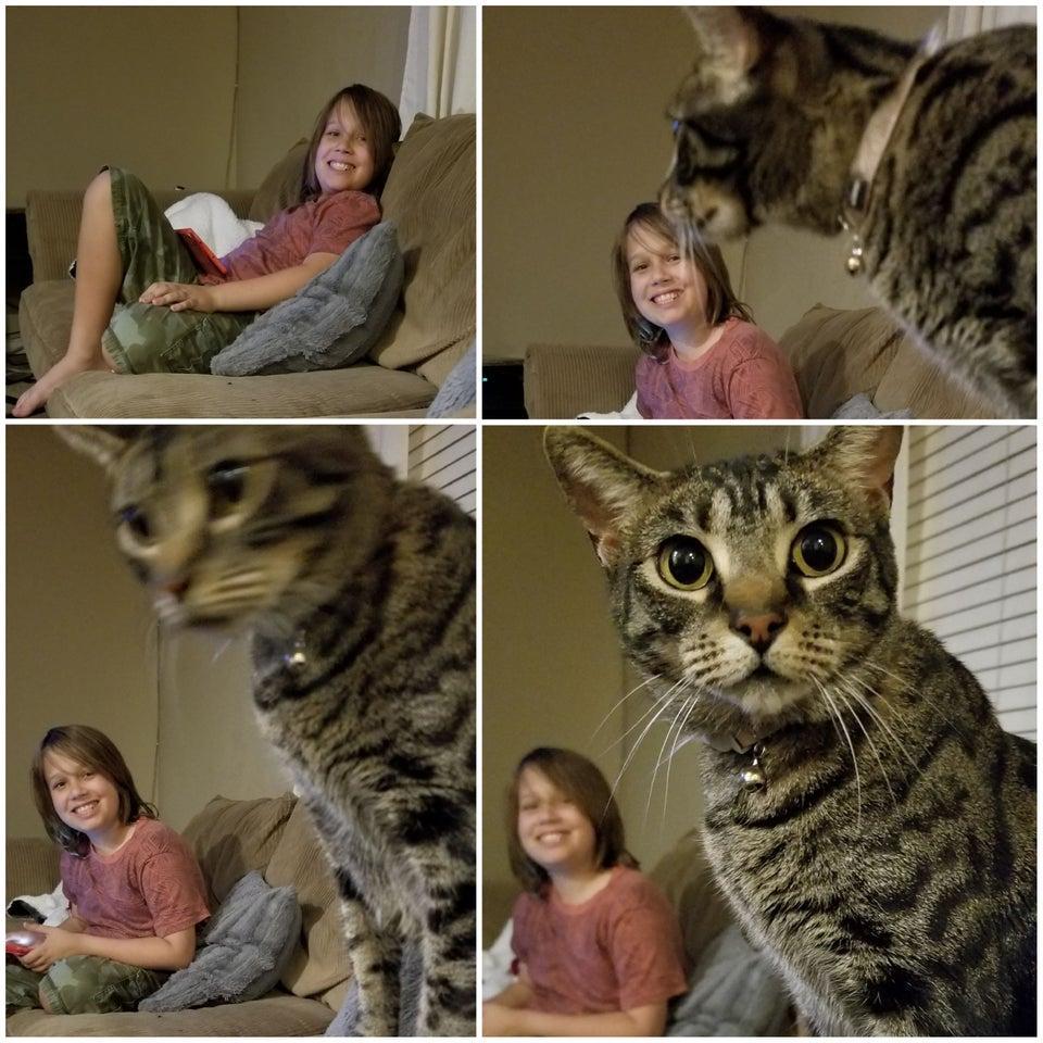 13-animal-photobomb-1559573622263.jpg
