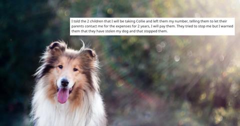 featured-lost-dog-1583950174819.jpg