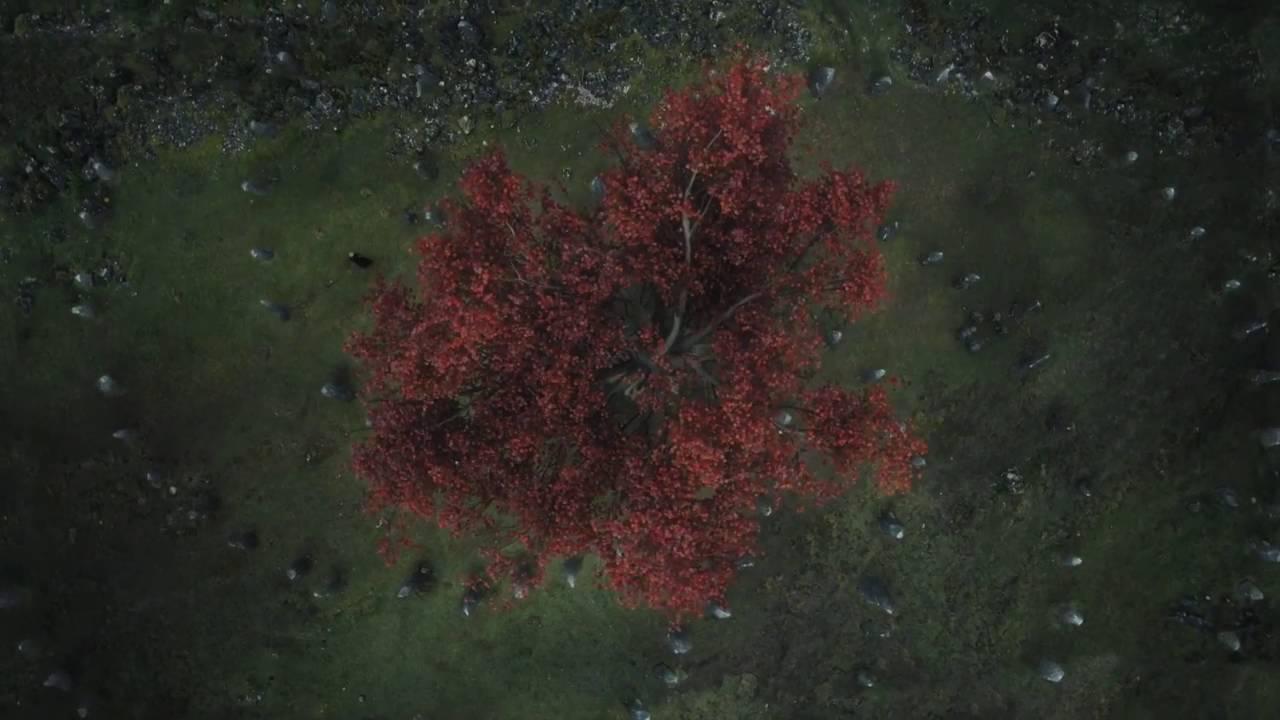 weirwood-tree-1555359448723.jpg