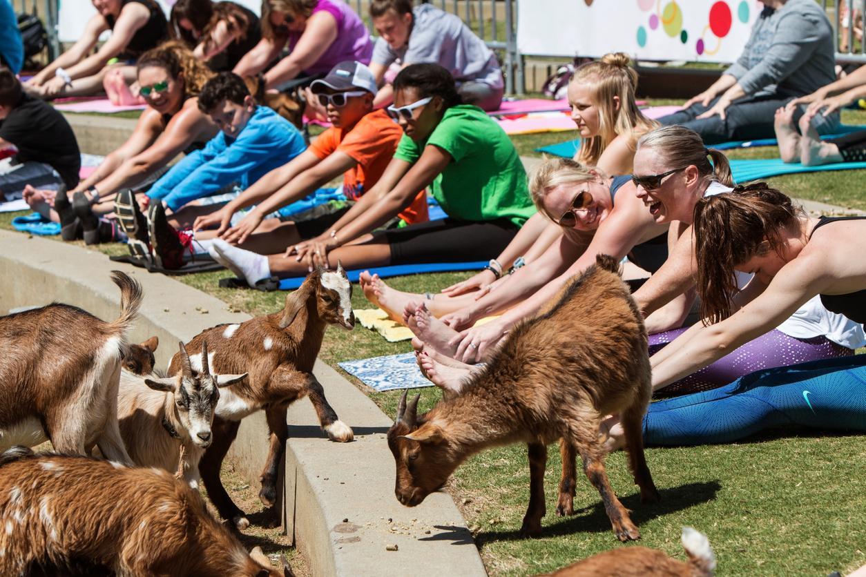 goat-yoga-1547154011758.jpg