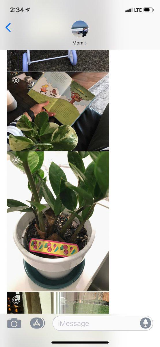 plants-grandbabies-5-1553799927252.JPG