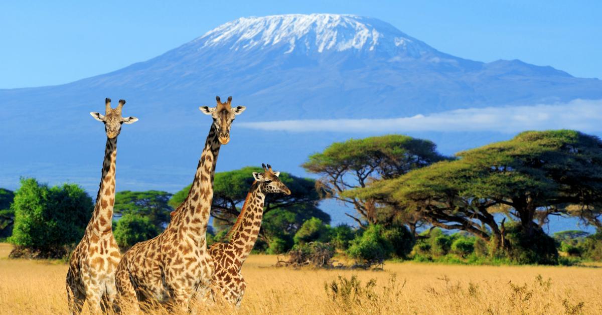 giraffes-1534347236644-1534347238773.jpg
