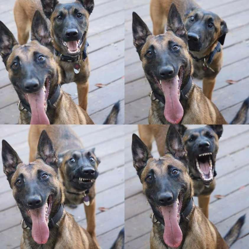 19-animal-photobomb-1559573721591.jpg