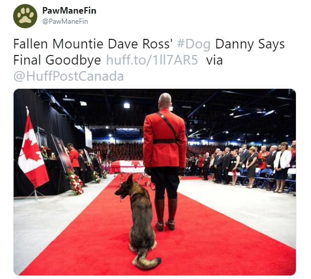 dave-ross-mountie-danny-1543865231362.jpg
