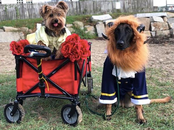 16-dog-costumes-1568997921861.jpg