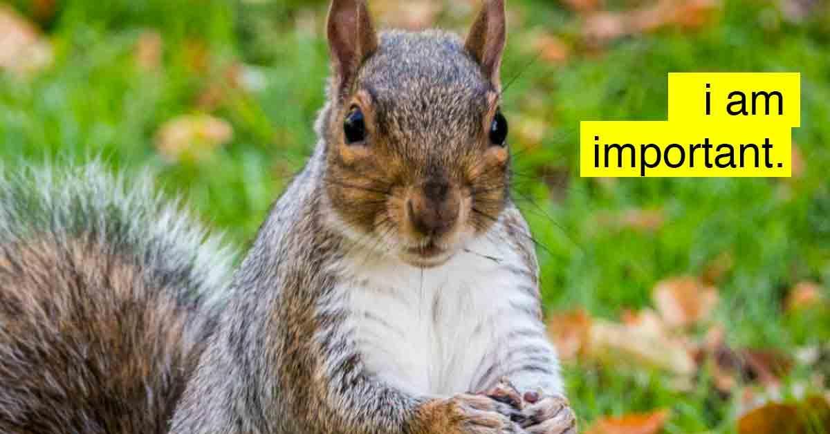 emotional-support-squirrel-1-1540578973521-1540579063171.jpg