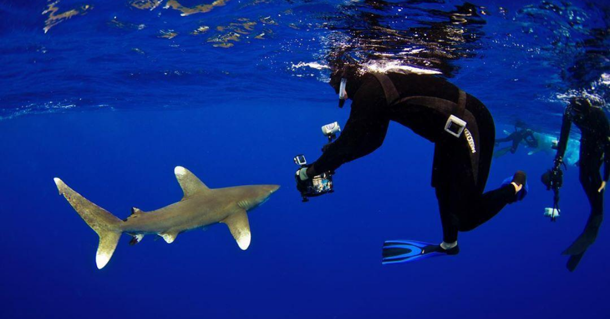 Dr. Austin Gallagher is the Tiger Shark King