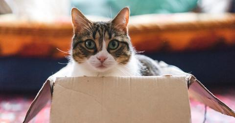 cat-playing-with-boxes-and-toys-picture-id928511654-1554823583061.jpg