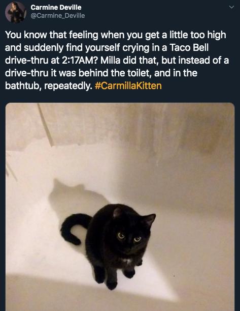 13-high-cat-1581444489287.jpg