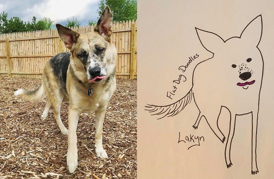 17-flat-dog-doodles-1567790728911.jpg