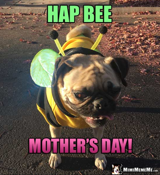 happy-dog-mom-day-meme-3-1557500372885.png
