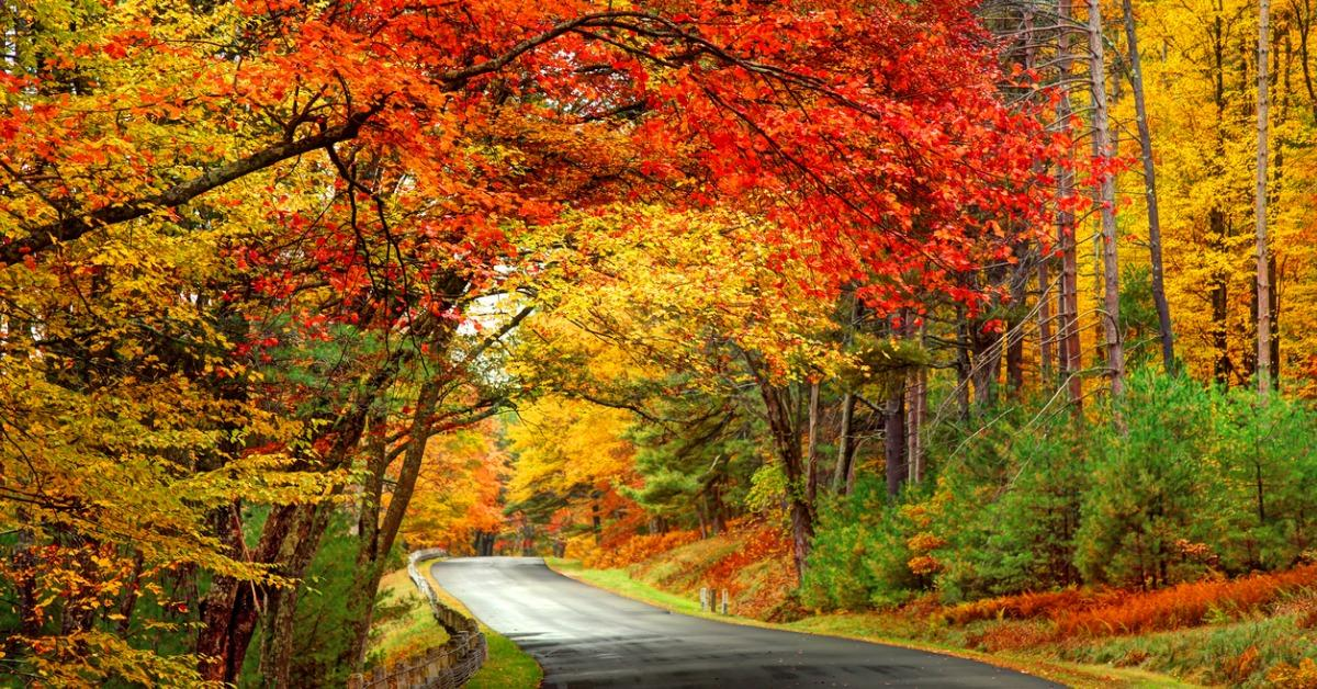 scenic-autumn-road-in-the-quabbin-reservoir-park-area-of-picture-id1019444230-1548444905799.jpg