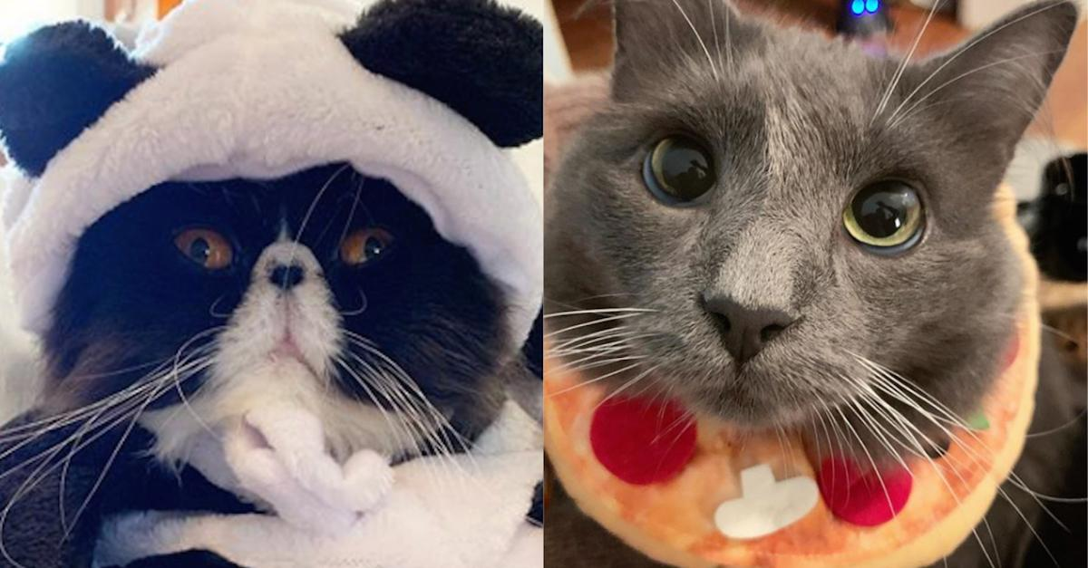 These Cats Dressed up for Halloween & Their Costumes Are Incredible