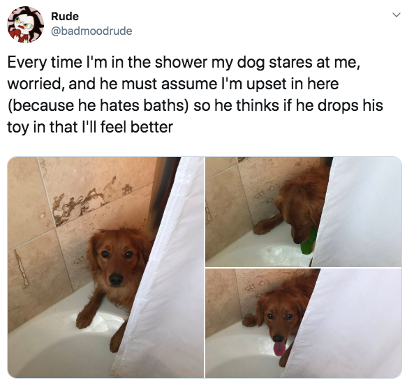 17-wholesome-1568141104851.jpg