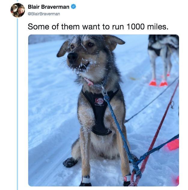 10-sled-dogs-1563217870008.jpg